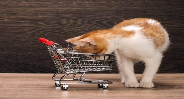 Quanto costa mantenere un gatto