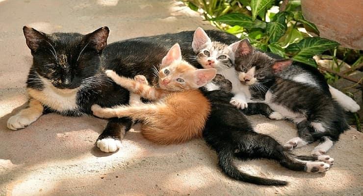 Nomi di gatti con la M