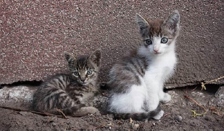 gatti parassiti primavera