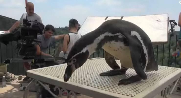 """Gli animali dei film di Checco Zalone: il pinguino durante le riprese di """"Quo Vado"""""""