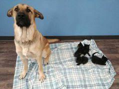 La cagnolina e i cinque gattini (Foto Facebook)
