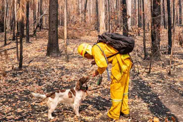 incendi australia animali