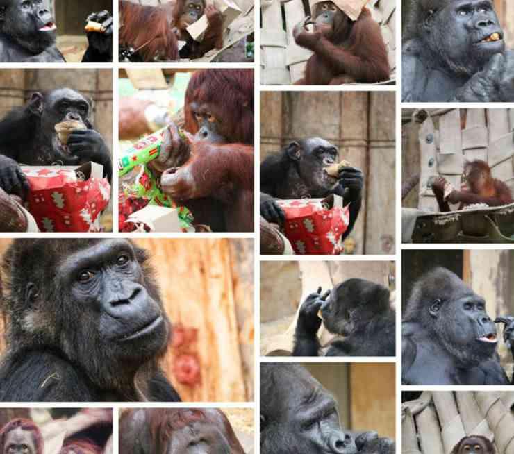 Le scimmie decedute (Foto Facebook)