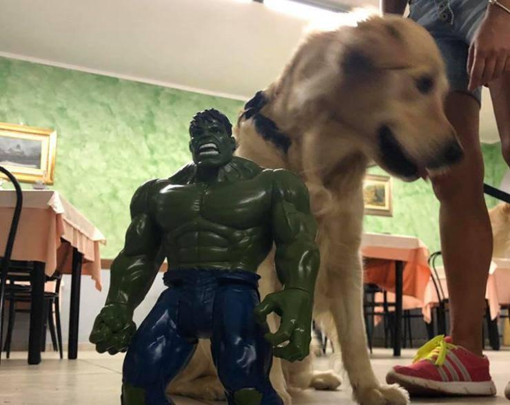 Cullen cane smarrito grugliasco