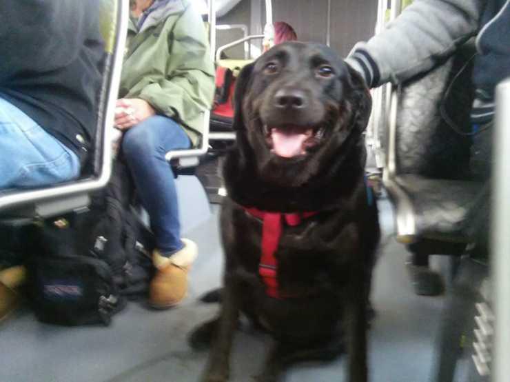 La cagnolina sull'autobus (Foto Pixabay)