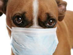coronavirus nel cane e nel gatto