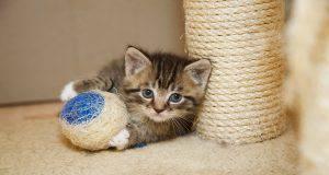 Nomi di gatti con la D (Foto iStock)