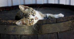 Nomi di gatti femmine e maschi con la L