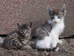 Nomi di gatti con la X