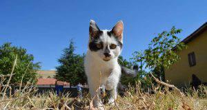 Nomi di gatti originali e particolari