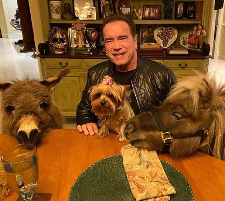 Schwarzenegger animali