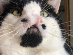 gatto con due nasi
