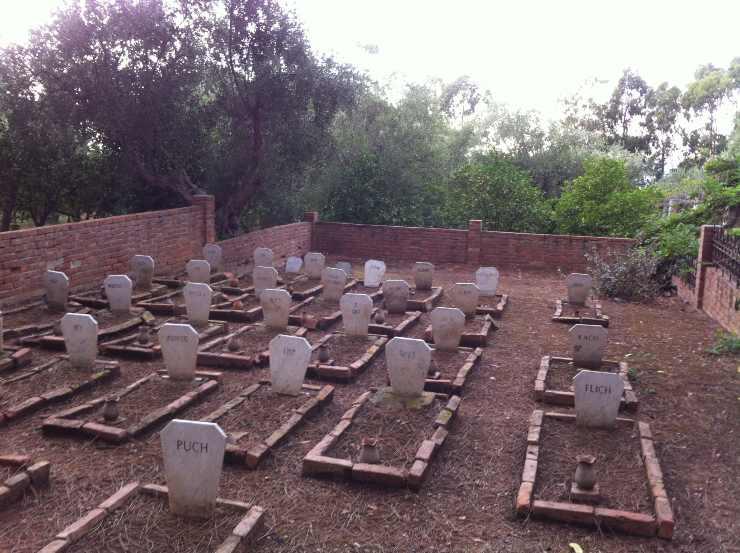 cimitero dei cani