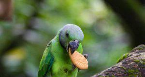 alimenti dannosi per gli uccelli
