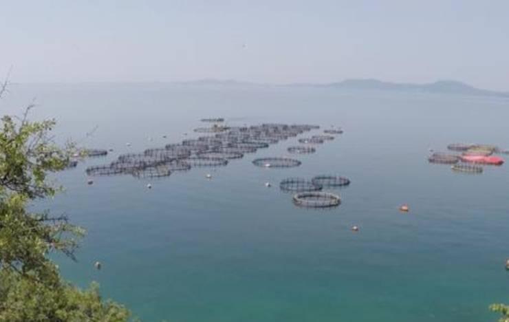 allevamenti intensivi grecia pesci