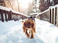 passeggiare cane freddo