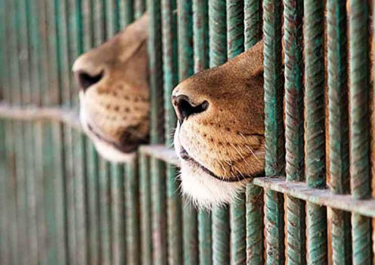 Francia: via animali selvaggi dai circhi entro 5 anni