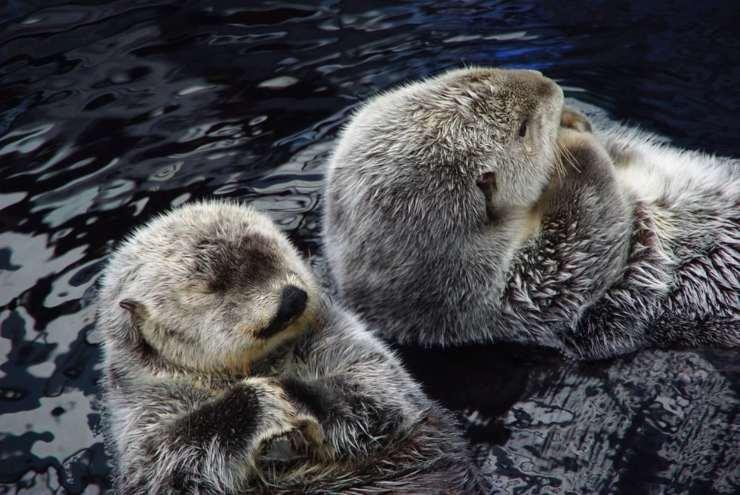 cucciolo foca monaca a lecce