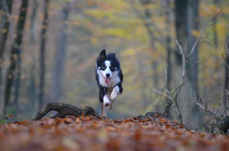 Cane che fugge (Foto Pixabay)