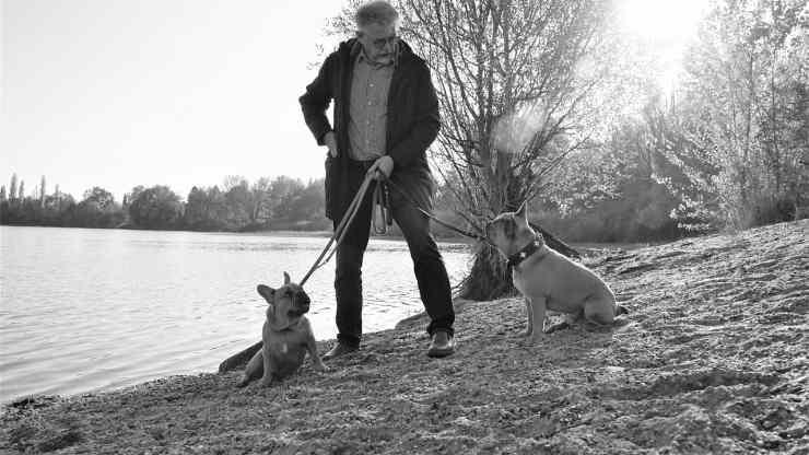Il padrone che richiama i cani (Foto Pixabay)