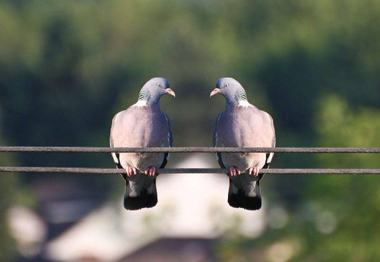 eliminare le macchie di cacca del piccione