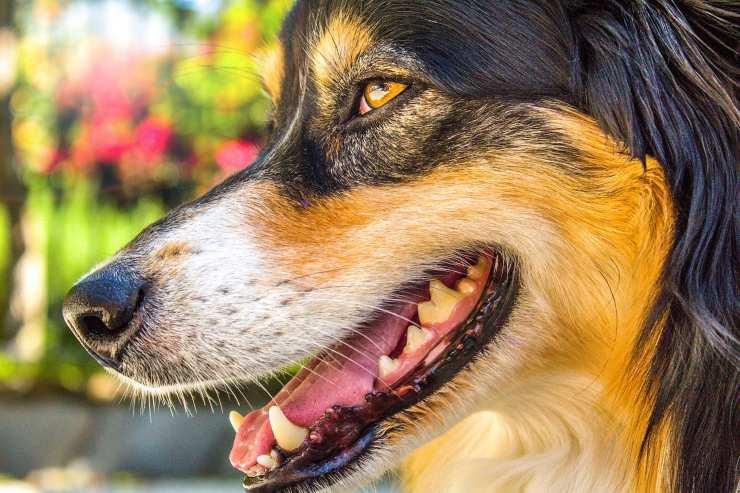 bocca del cane