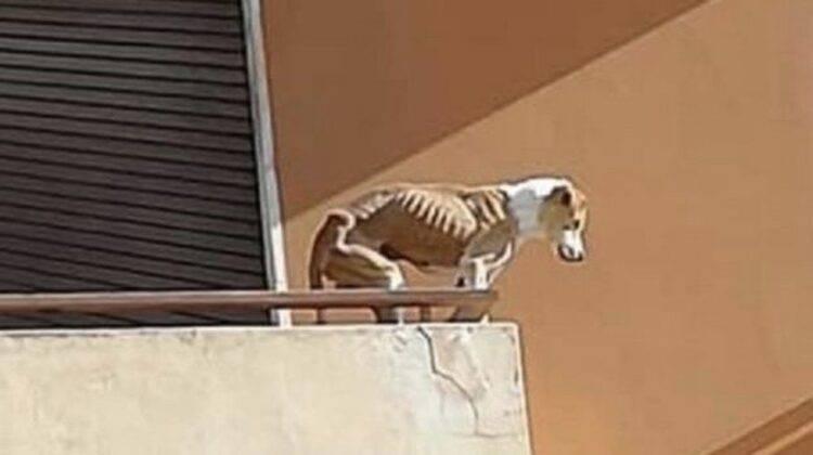 cane cade terrazza