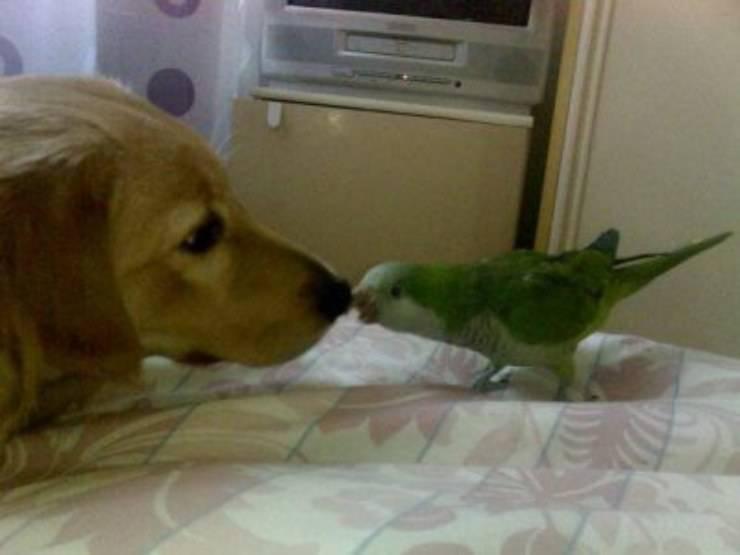cane e pappagallo