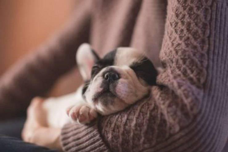 cane tra le braccia