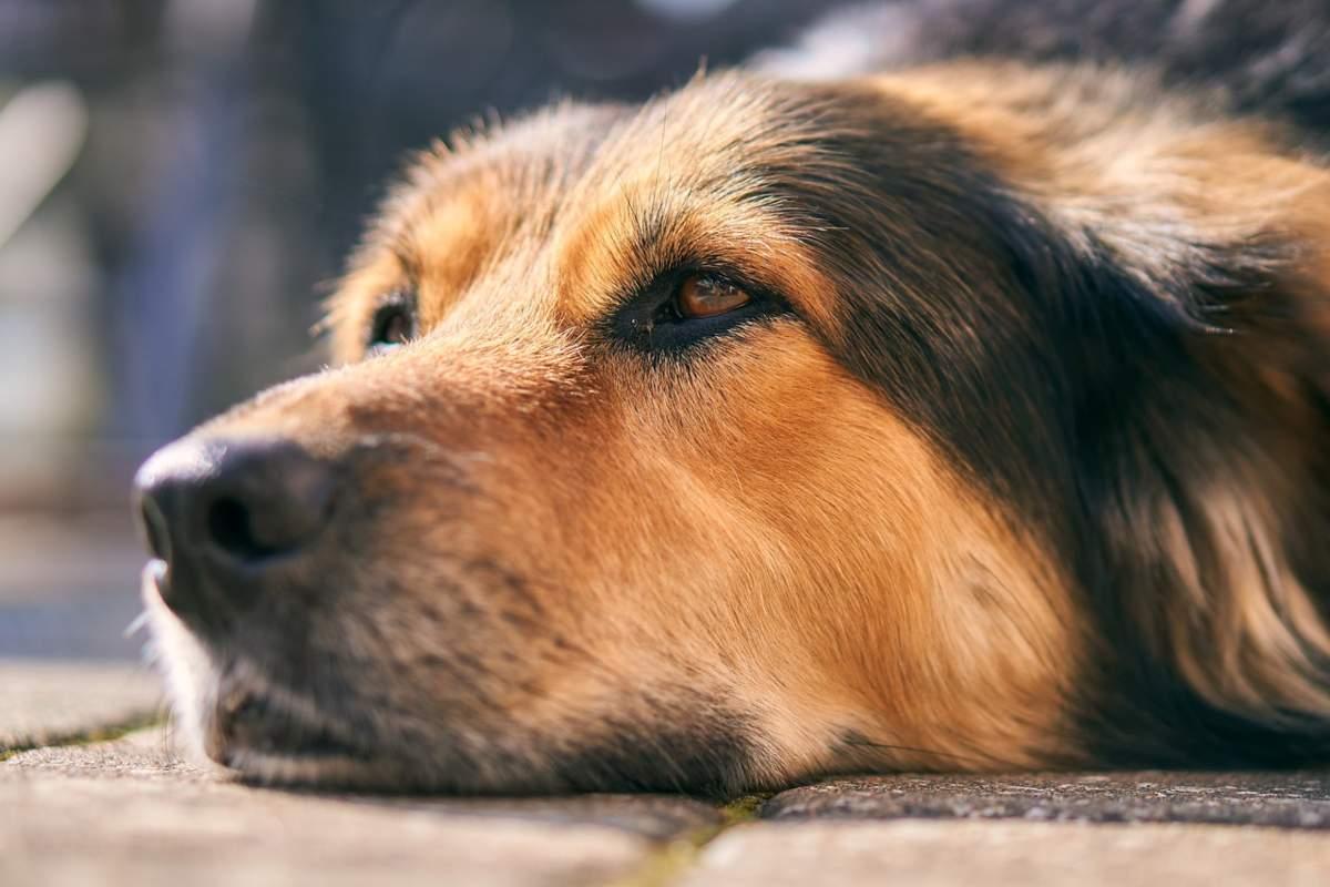 Giardia nel cane rimedi naturali - Deodorant natural hofigal ingrediente