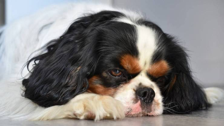 cane tenia malattie intestinali