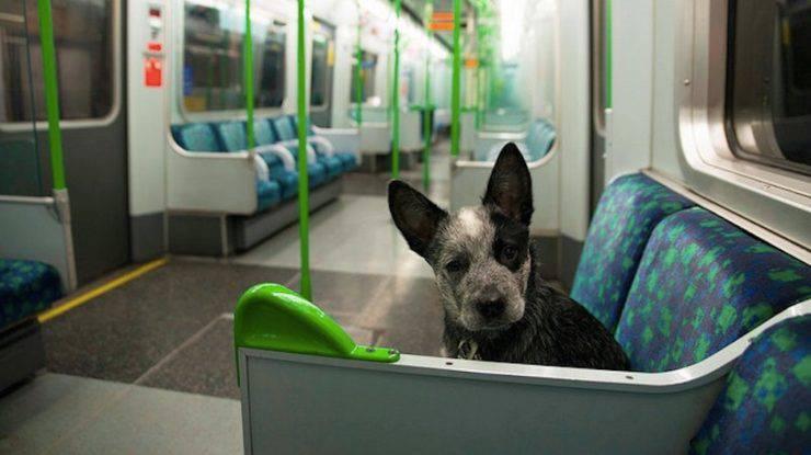 trasporto animali metropolitana milano