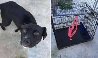 cane abbandonato cuccioli