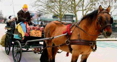 scuola bus a cavallo