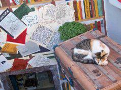 I gatti amano le valigie