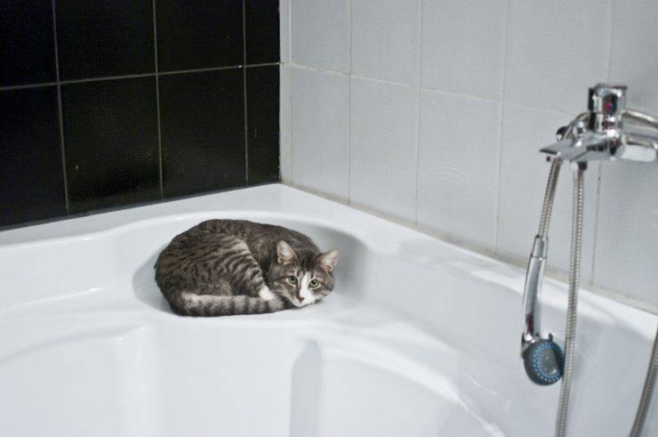 gatto bisogni vasca doccia