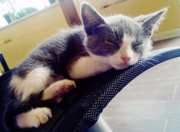 gatto dorme molto