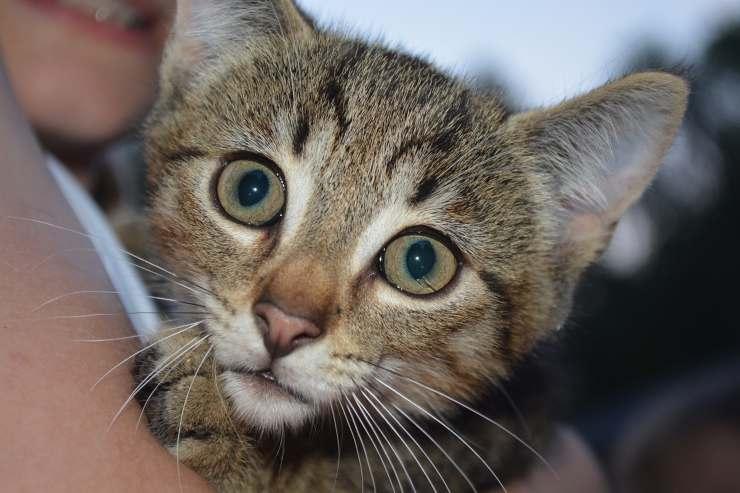gatti gattare igiene