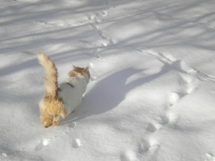 Gatto nella neve (Foto Pixabay)