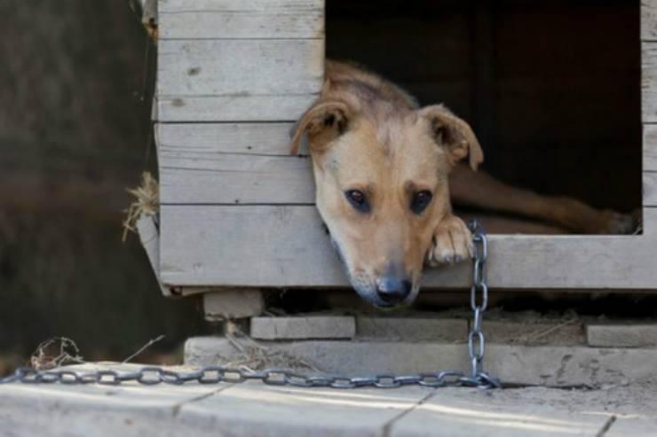 Cane triste legato alla catena Facebook