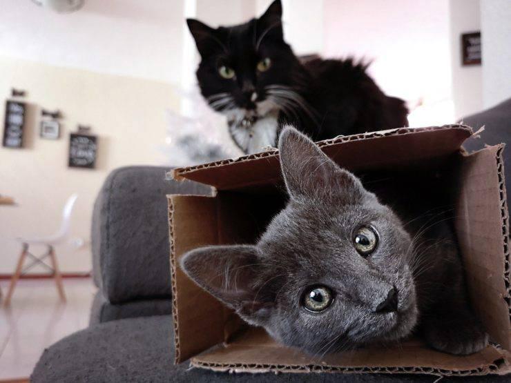 I gatti amano le scatole