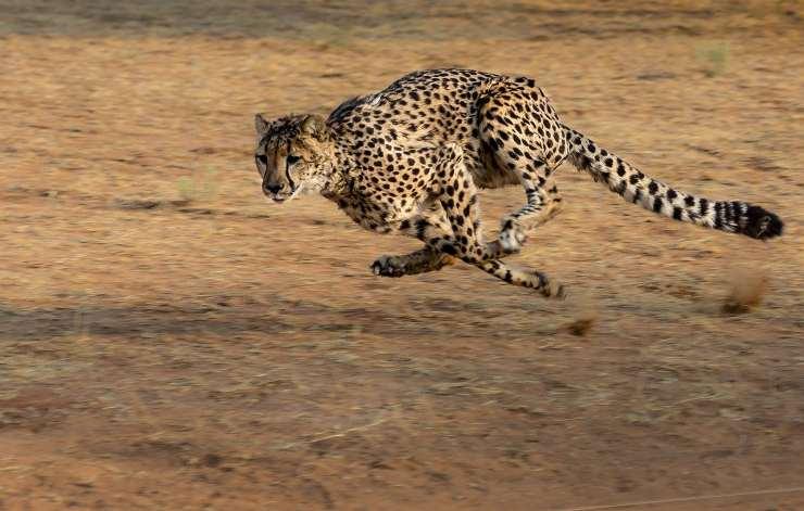 Animali più veloci del mondo
