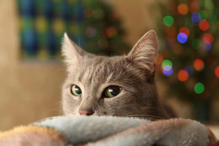 Gattina si nasconde (Foto Pixabay)