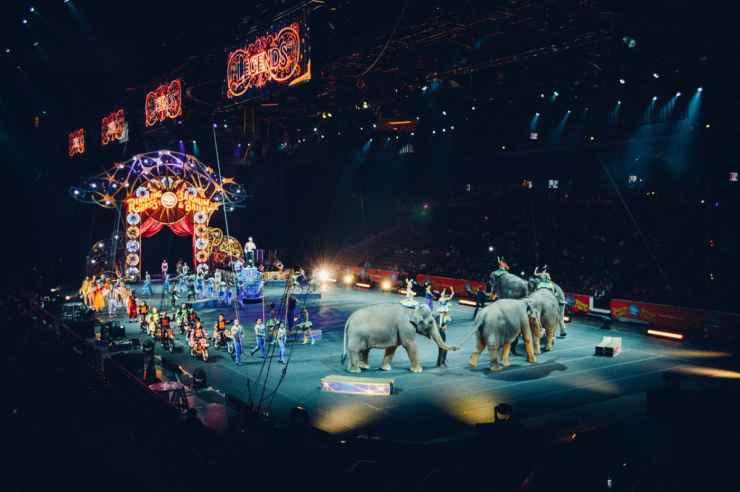 Circo senza animali (Foto Pixabay)