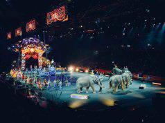 No agli animali nel circo (Foto Pixabay)