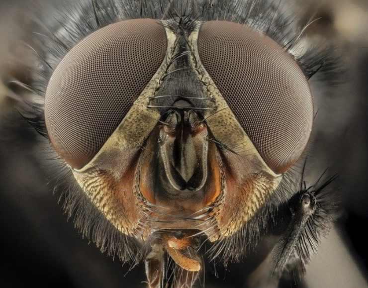 come vedono gli insetti