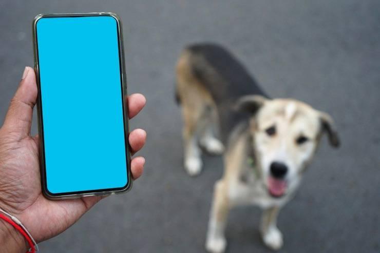 animali smarriti dispositivo