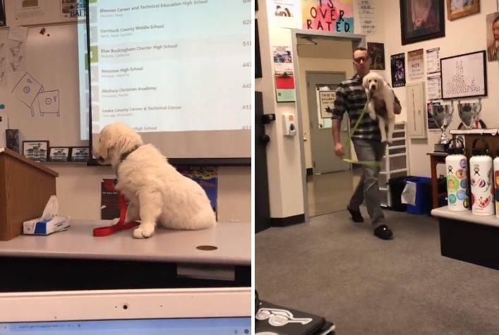 professore minaccia uccidere cucciolo