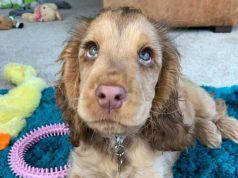 Winnie e i suoi occhioni (Foto Instagram)