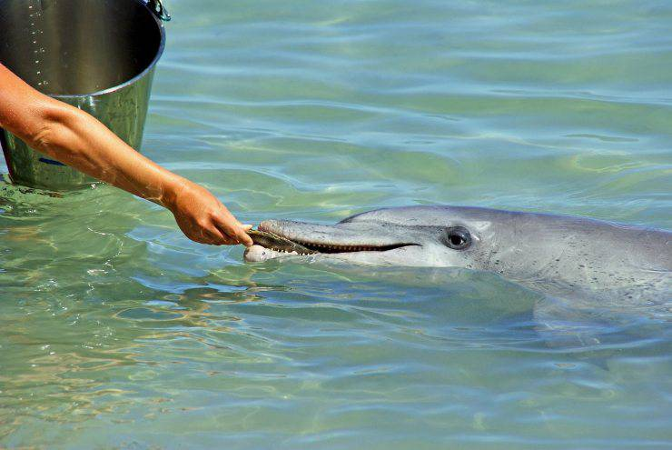 delfino mangia